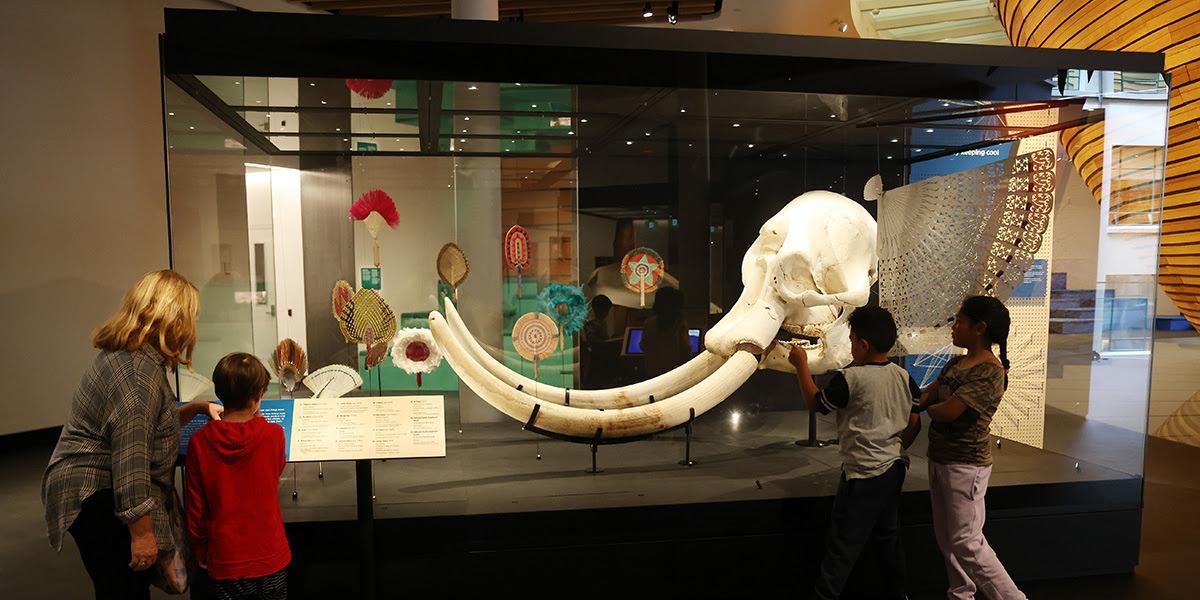 AUCKLAND WAR MUSEUM <br /> | AUCKLAND, NEW ZEALAND