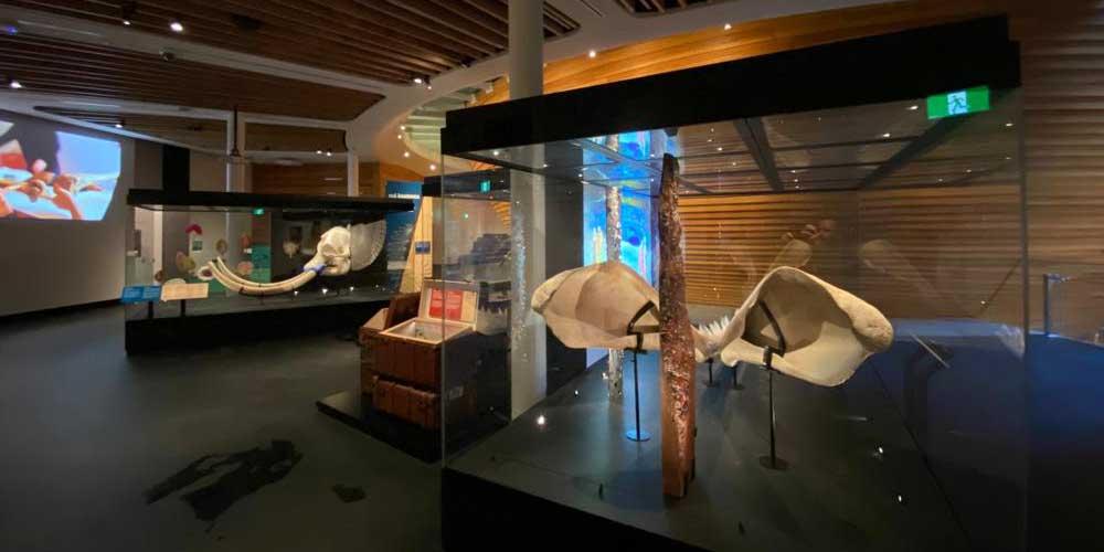 European_museum_technology_Auckland_war_museum_showcases_1